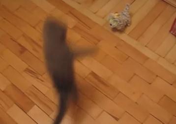 子猫がおもちゃにスーパーアタック