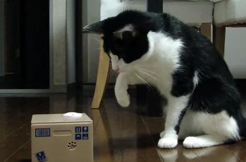 ネコ vs. 猫貯金箱