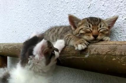 寝る猫と遊びたい猫