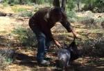 カンガルーの子供を簡単に捕まえる方法