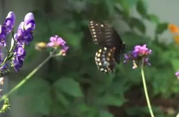 ミツバチ vs. 蝶