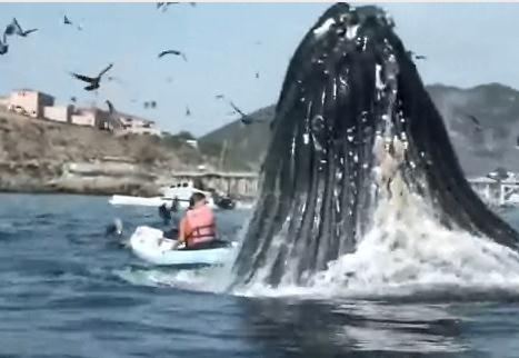 カヤックで遊覧中の女性の真後ろでクジラがジャンプ