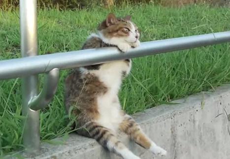 黄昏時に座ってまどろむ猫