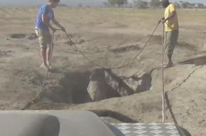 穴に落ちて出られなくなった子象を救助、親と感動の再会