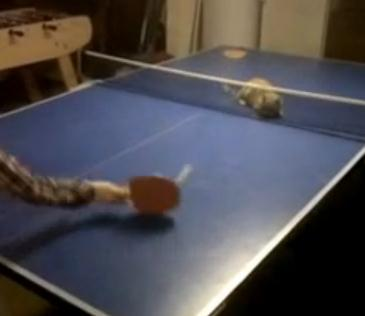 卓球の得意なネコ