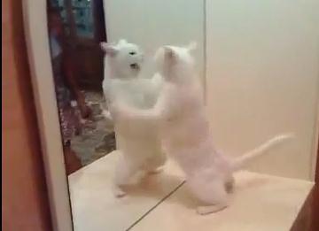 鏡の自分と激しくやり合うニャンコ