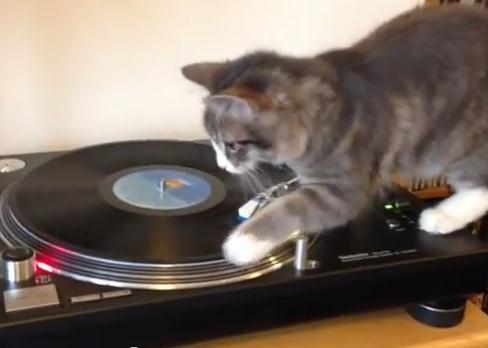 ターンテーブルで猫が面白いことに