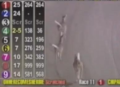 競馬のコースに鹿が乱入