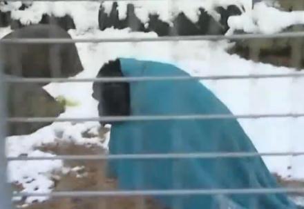 寒いのが苦手なチンパンジー