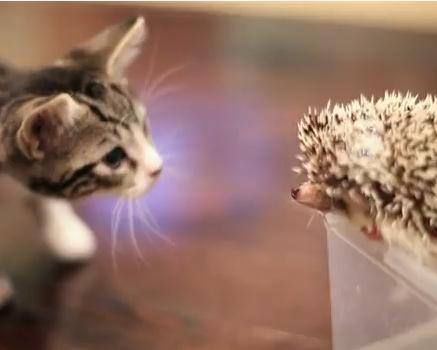 ハリネズミと子猫