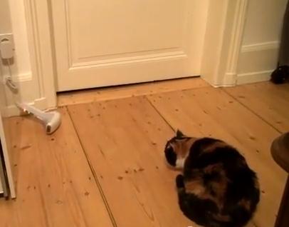 猫の近くに靴下を投げると…
