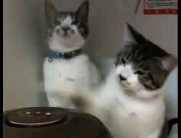 炊飯器と戦う猫