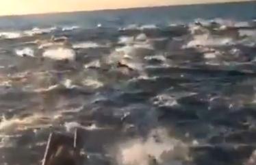 サンディエゴ沖で焼く10万頭?のイルカが大移動