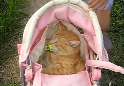 赤ちゃんにされてしまったネコ