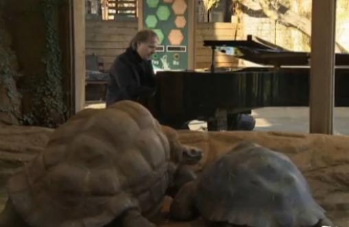 リチャード・クレイダーマンがカメに贈るピアノ演奏
