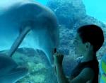 水族館のイルカと会話する方法