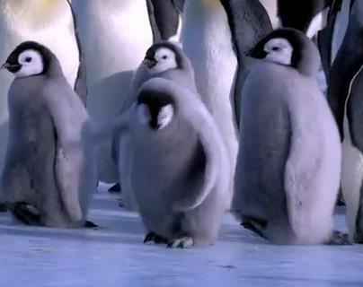 ペンギンのNG集