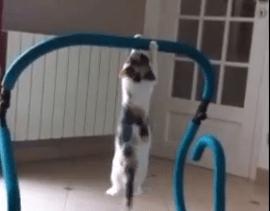 トレーニングに励む猫