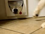 猫用通路で遊ぶハスキー犬