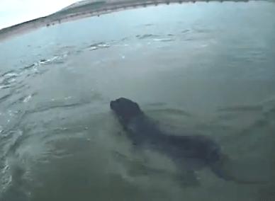 沖に流されたワンコの救助
