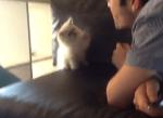 風をキャッチしようとする子猫