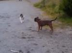血気盛んな犬を触れずして撃退する猫