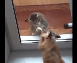犬と猫、ガラス越しの戦い