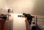 水槽に向かってジャンプする猫