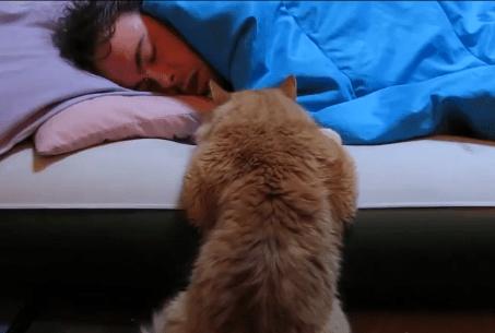 猫目覚まし映像集