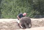 男性の膝の上に座る象の赤ちゃん