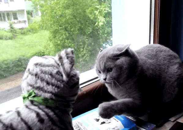 不審者に厳しいニャンコ、炸裂する鋭い猫パンチ
