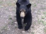 熊が目の前に現れた!さあどうする!?