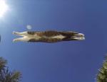 パルクール猫