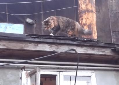 屋根から家に侵入する忍者猫