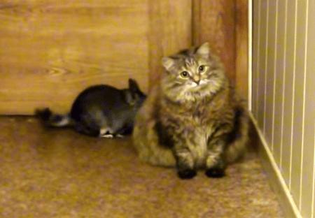 犬と猫とチンチラの関係