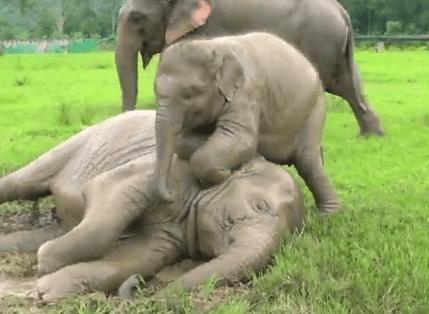 雨を楽しむ象の動画