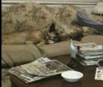 気持よく寝ていたワンコに突然猫がアタック