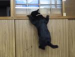 クリフハンガー黒猫