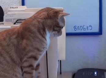 職場に猫がいる環境、仕事は捗る?