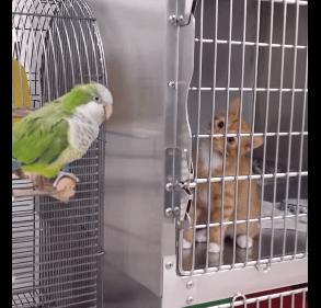 鳥に釘付けになり、ぬいぐるみのように動かなくなる猫