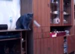 ボールを吊るして猫と楽しく遊ぼう