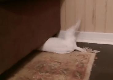 狭いソファーの下に潜り込むワンコ