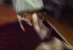 忍者のような猫の動きに困った顔をするワンコ