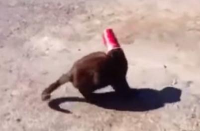 コップに頭を突っ込み抜けなくなった猫をニューファンドランド犬が救助