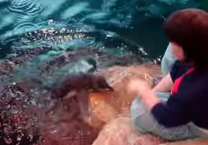 軽いパニック状態になりながら泳ぎの練習をするペンギンの赤ちゃん