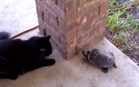 カメとネコのゆるい追いかけっこ