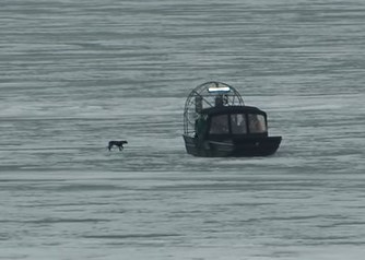 凍った湖の上を彷徨うワンコをプロペラボートで救出