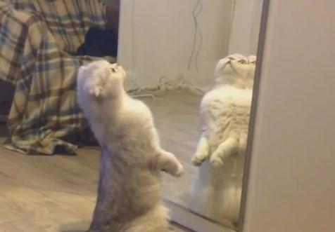 毎日暇なニャンコ、猫にとっての幸せってなんだろう?