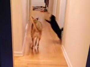 ワンコを襲いかかる忍者猫