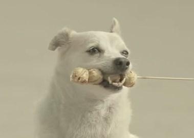 犬の恩返し / キアナキン銀行のCM